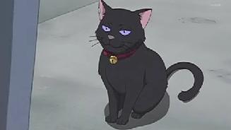 猫 飯待ち