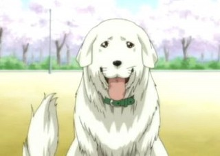 犬 リアルな毛