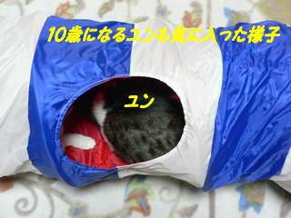 0107yun.jpg