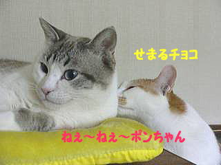 0114p-c1.jpg