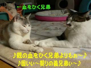0129sakazuki-1.jpg