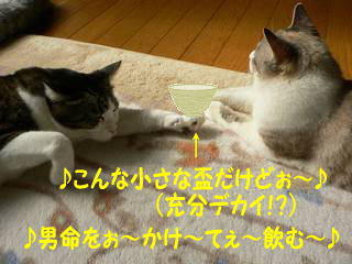 0129sakazuki-2.jpg