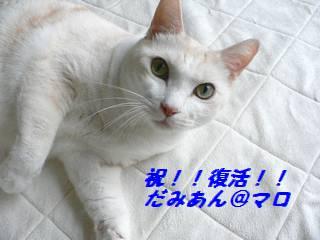 0911maro.jpg