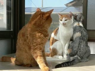 1017cats.jpg
