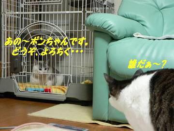 1215pon-yun.jpg