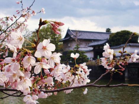 1皇居背景桜