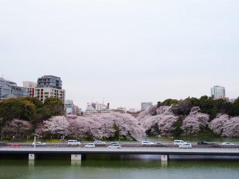 3千鳥ヶ淵 高速と桜