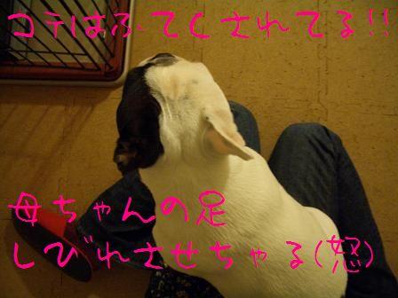 CIMG5943.jpg