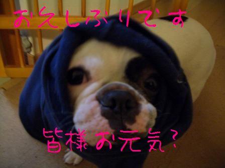 CIMG7331.jpg