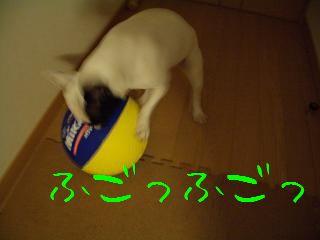 CIMG7795.jpg