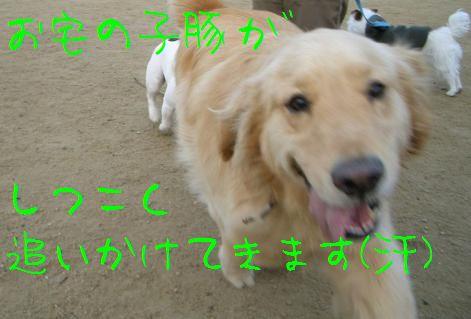 CIMG8390.jpg