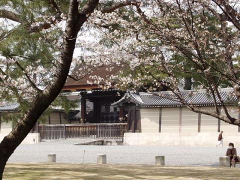 御苑内、御所の建礼門前の桜P4052690.jpg