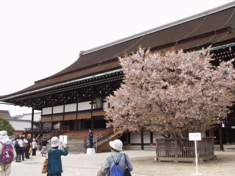 御苑内、御所の紫宸殿前の左近の桜P4092858_20080409223309.jpg