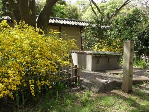 京都迎賓館の東側、染殿井の満開の山吹P4193070.jpg