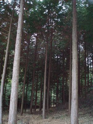 とある森林