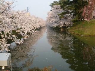 08sakura_1.jpg