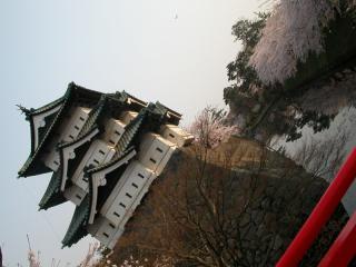 08sakura_3.jpg