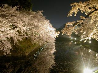 08yozakura_3.jpg