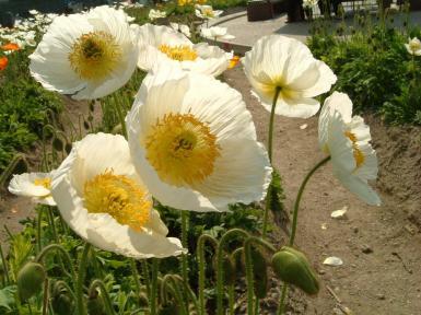 宮前町花摘み園