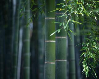 image竹