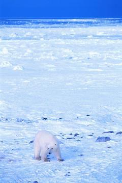 image北極