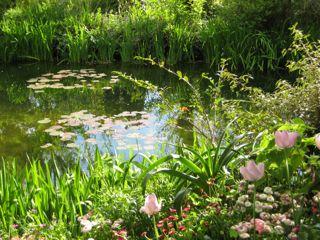 モネの庭8