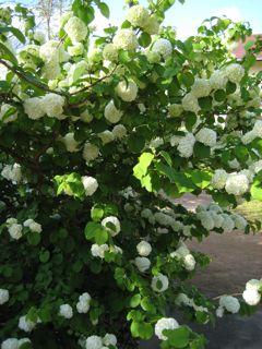モネの庭23