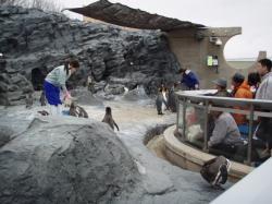 ペンギン館(モグモグタイム)