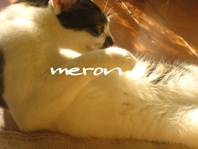 meron1230.jpg