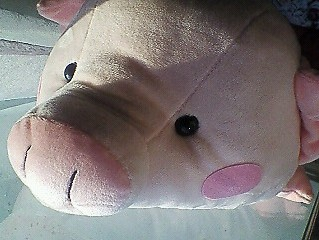 nice pig.