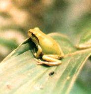 カエル(蛙/かえる)