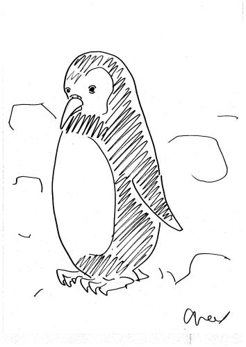 かわいいペンギンの赤ちゃん
