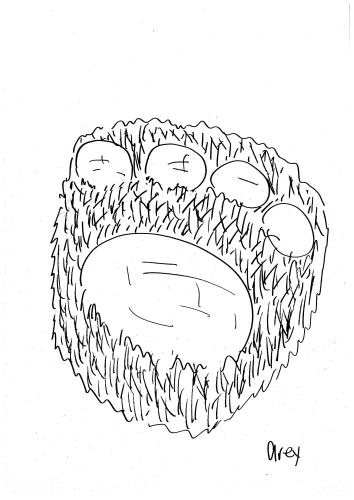 猫の足の裏の肉球