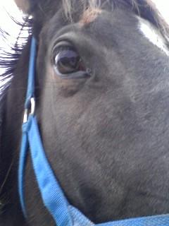 大きい目が馬の一番の魅力!