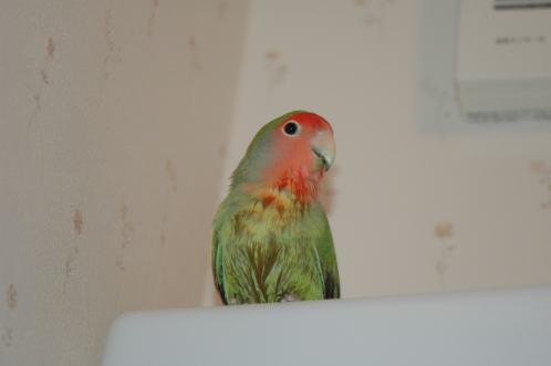 水浴びしちゃった