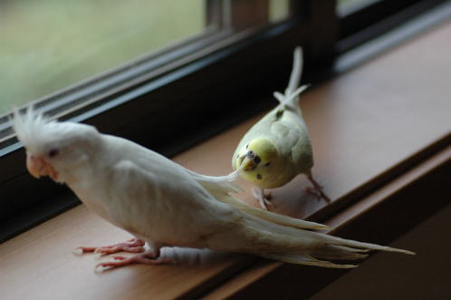 ピースとアル子さん