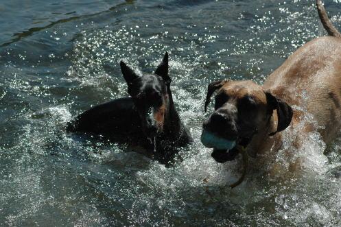 ゴンちゃんと水遊び