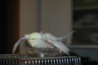 水浴びその4
