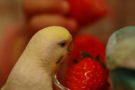 イチゴおいしいね