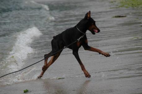 波が怖いのよ