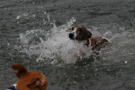 泳いでます
