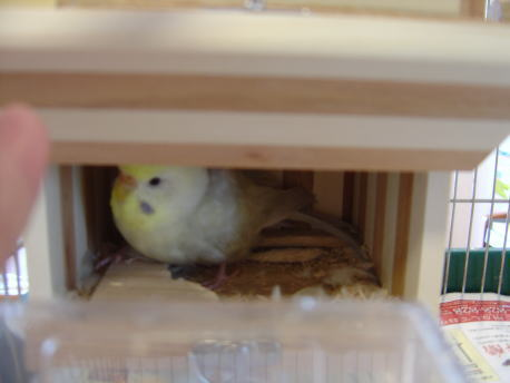 巣箱の中のアル子さん