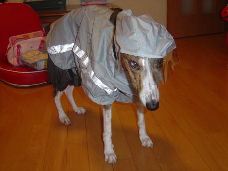宇宙探査犬