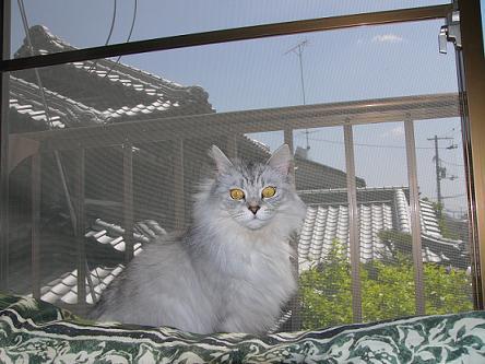 初心者猫さん