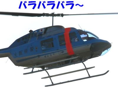 P1110488.jpg