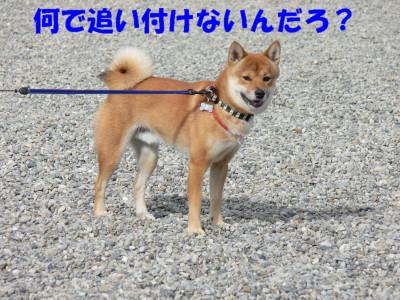 P1130019.jpg