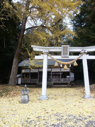 銀杏埋まる某神社の境内