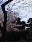 sumiyoshi_park2008_01.jpg