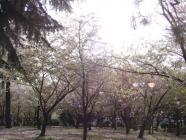 sumiyoshi_park2008_04.jpg