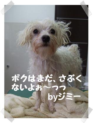 20071104184847.jpg